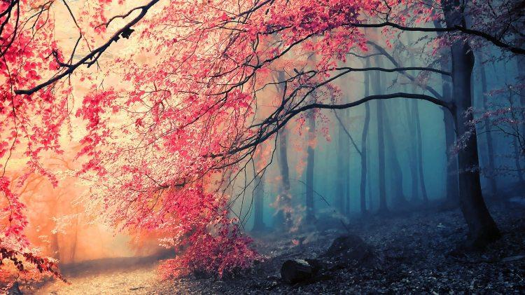 autumn bruh
